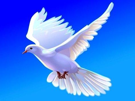 Doves-doves-38537875-1024-768